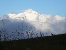 rando panorama: Mont Blanc et chamois