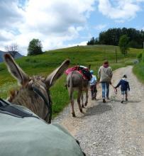 Randonnée avec des ânes_ Thônes Haute-Savoie